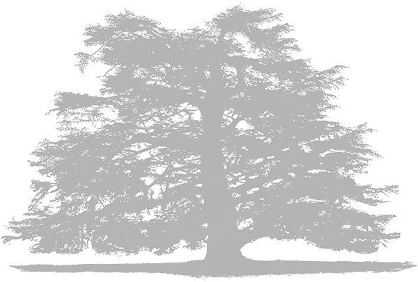 A white tree, the logo of Brockwood Park School